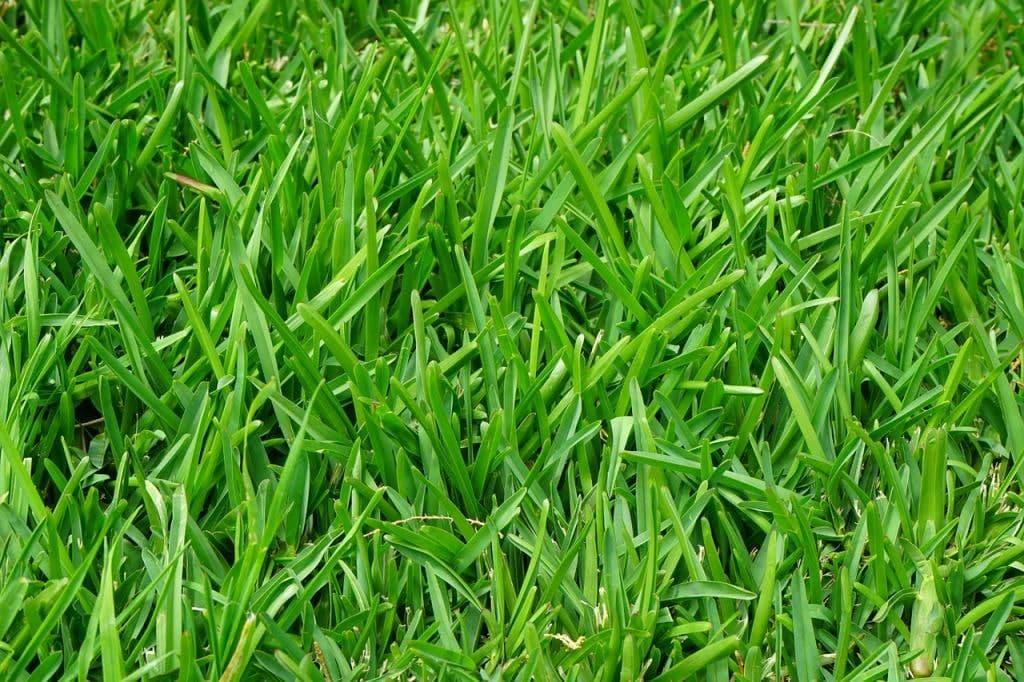 Во дворе на Зарайской восстановили газон